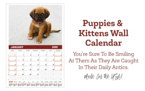 2018  Puppies & Kittens Wall Calendar